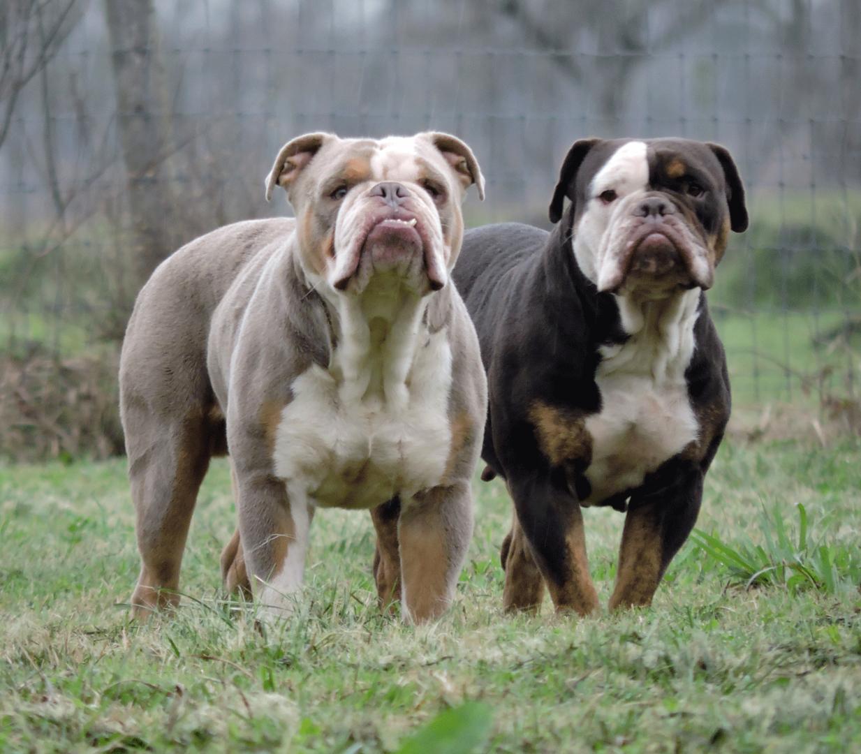 The Bulldog Express Home