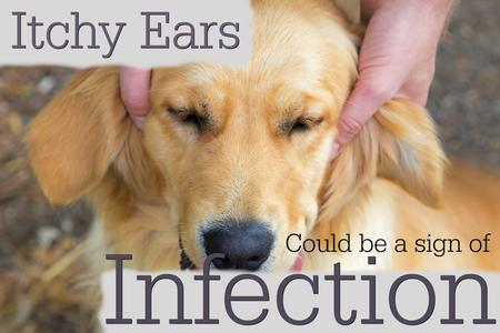 Ear Infection Information