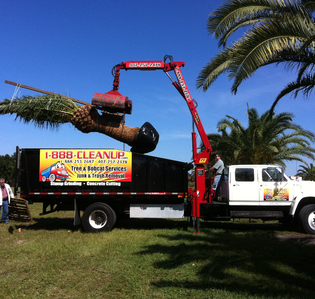 Concrete Cutting Company Tree Trimming 888cleanup Llc