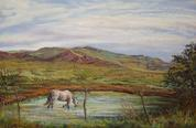 A Long Cool Drink, original southwestern pastel landscape painting by Texas artist Lindy Cook Severns, horse in the Davis Mts