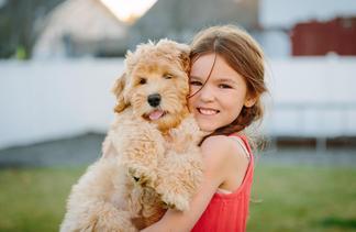 Brickhaven Labradoodles - Labradoodle Puppies Washington