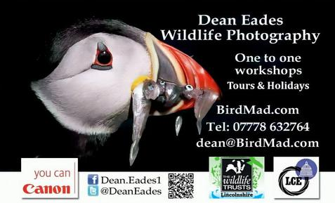 Dean Eades BirdMad Wildlife Photography