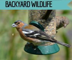 Bird & backyard wildlife supplies at Golf Rose Pet Store | Golf Rose Animal Services