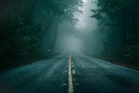 dark forest road wallpaper