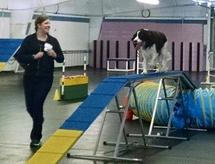 Agility Classes