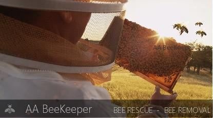 El Cajon Bee Removal and Beekeeper