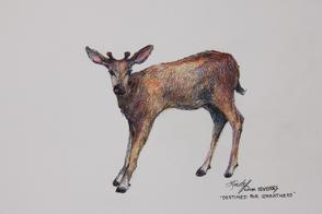 Destined For Greatness colored pencil drawing of a fawn by Lindy C Severns