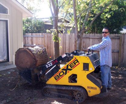Tree pruning underway in Salinas, CA