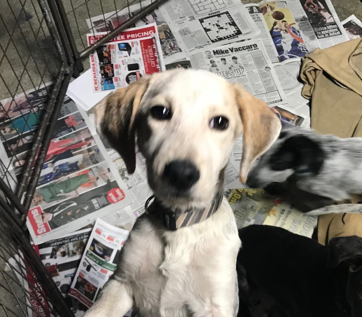 Happy Life animals up for adoption