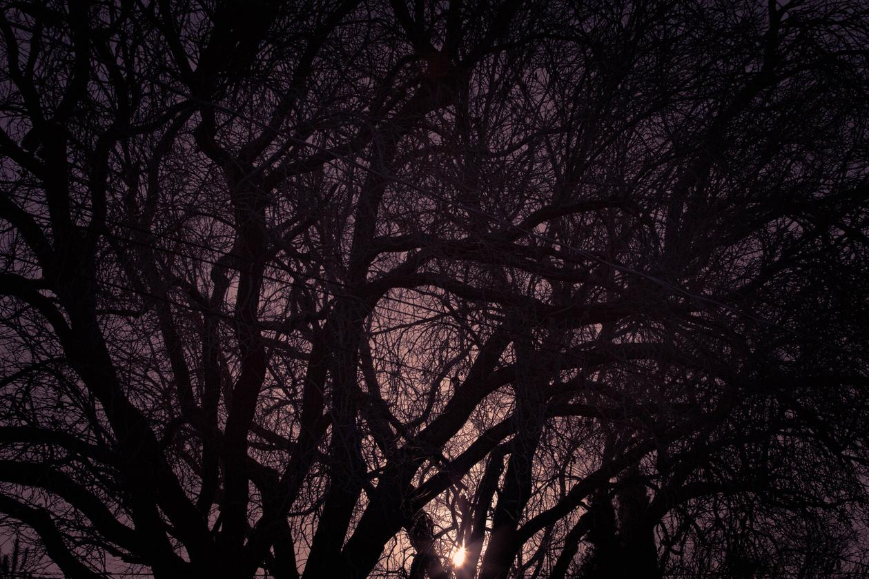 dark sunset nature lovers forest landscape