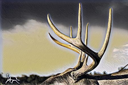 Whitetail Photograph enhanced
