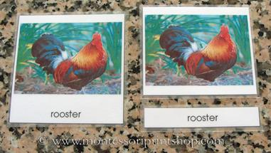laminated Montessori 3-part classified cards- montessori print shop
