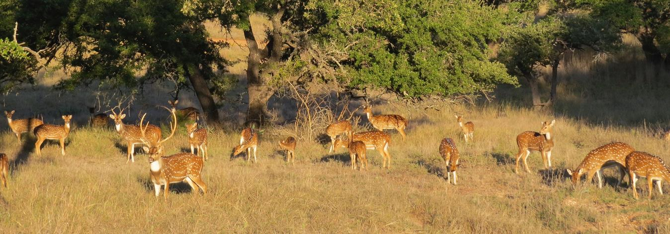 Texas Exotic Hunting Trips