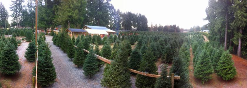 For a Treemendous Good Time. Frostys Family Christmas Tree Farm ...