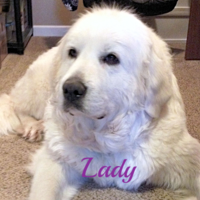 Lady Wells Providence Great Pyrenees