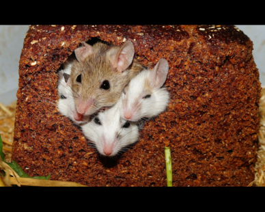 mice eating a loaf of bread