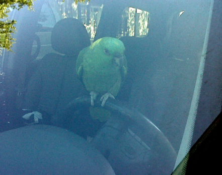 Parrot on tour in Charleston SC