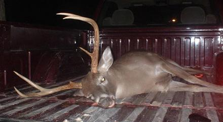 Alabama Whitetail Deer Hunting Season