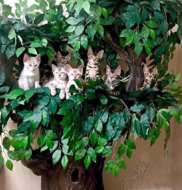 The Best Cat Trees for Multiple Cats