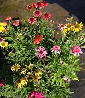 Featured Plant Spotlight 2016