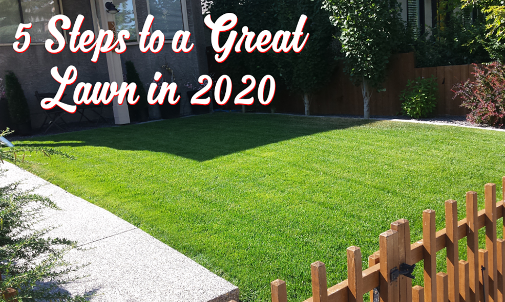 5 Steps to a Great Lawn in 2020 | FT Property Services Inc. | Calgary, Alberta