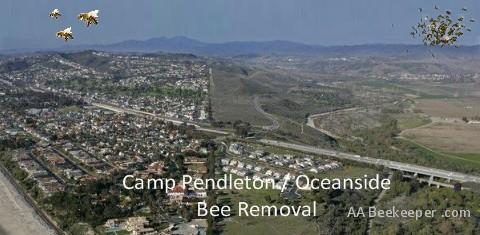 Bee removal Camp Pendleton area