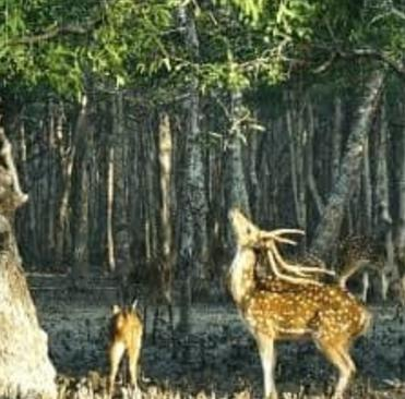 sundarbans 2 night 3 days tour packages from kolkata Sunderbans National Park Tourism