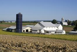 Amish farm field and farmhouse