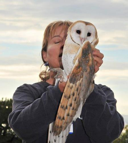 Release of Owl