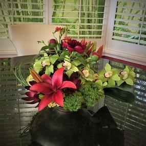 This breathtaking low and lush arrangement brings brilliance and character to any indoor setting! Magnificent green cymbidium orchids, red Asiatic lilies, red peonies, safari sunsets, celosia, freesia and moss orbs are artistically designed in a lovely dish