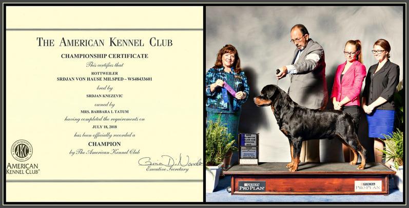 Bet Rottweilers Legendary Rottweiler Lines Panther Von Der Alten