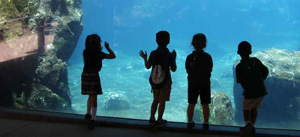 Aquarium Field Trip for Catholic Christian School in Hanford