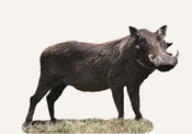 Central African Republic Warthog