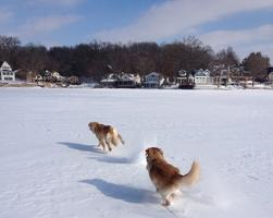 Dogs on frozen Sylvan Lake Indiana