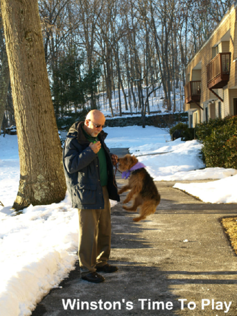 Positive Happy Dog Training New York City & Westchester