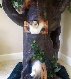 Luxury Cat Trees
