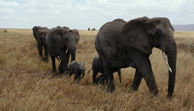 Family Life - herd of elephants - Philip Oldfield - Author of psychological thrillers with strong female protagonists.