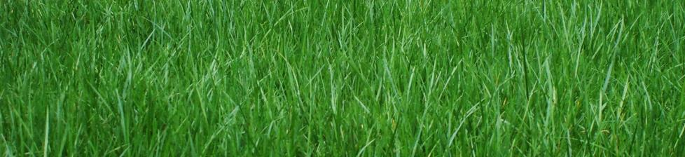 Non Irrigated Turf Grass Barefoot Farms Landscaping