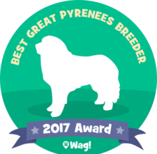 Wells' Providence ~ Voted BEST Great Pyrenees Breeder