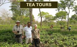 Tea Tours in Assam, India