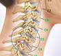 Pictures and/or videos of therapeutic exercises for the neck / cervical spine