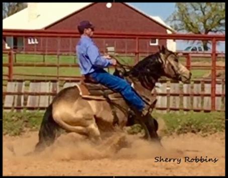 stallions dual patron stallion horse buckskin spark glo