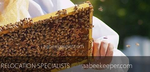 Bee removal Orange County