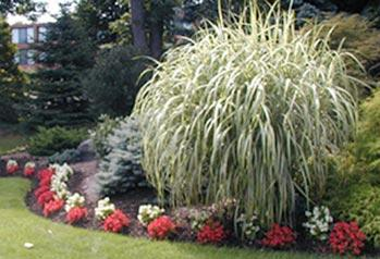 Backyard with commercial landscaping services in Richmond, VA