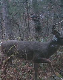 kentucky buck