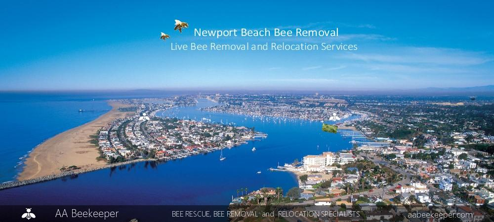 Newport Beach Bee Removal