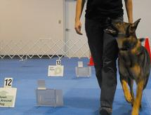 Obedience & Rally Classes
