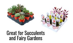 Great for Wholesale Succulent and Fairy Garden Programs
