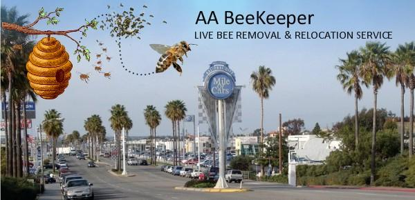 National City bee Removal service