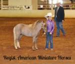 registered miniature horses